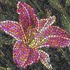 Λουλούδι - Άνθος